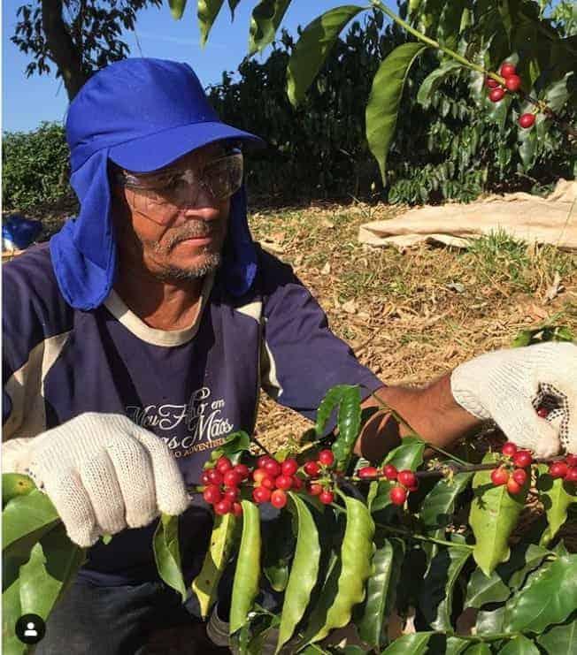 produtor do café gesha ou geisha