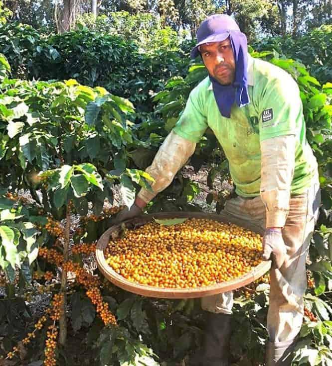 produtor trabalhando no café sudan rume